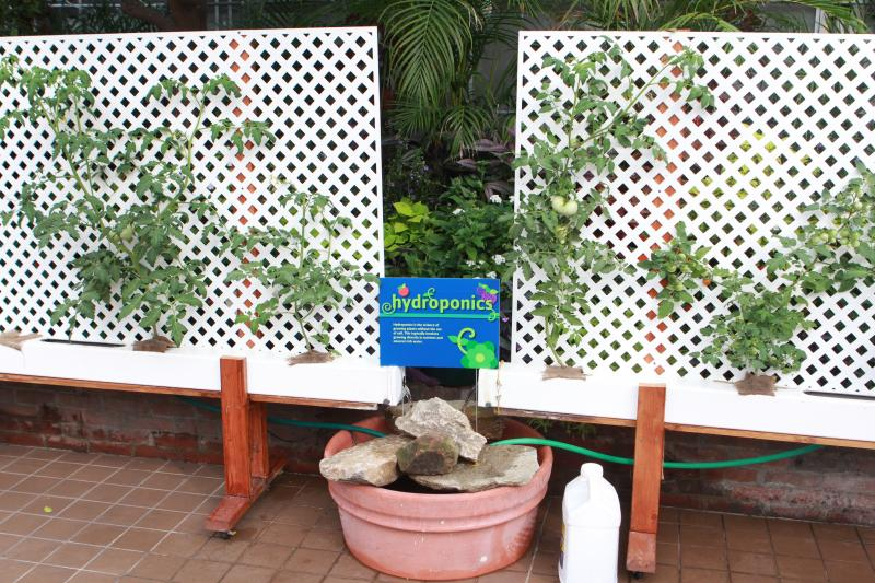 Home hydroponics systems can be created with easily accessible materials.