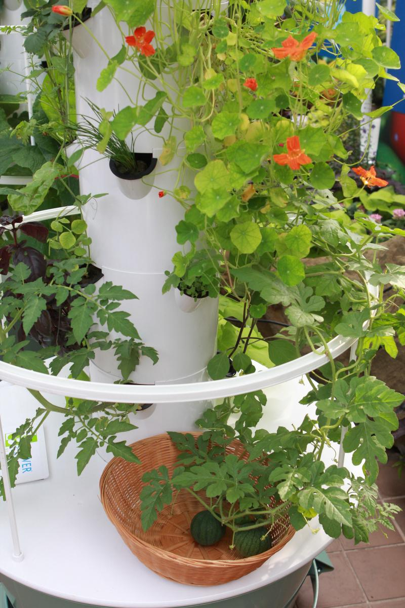 Watermelons can even be grown in aeroponic towers.