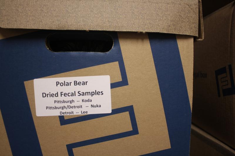 This is one of 14,000 polar bear fecal samples from around North America and housed at the Cincinnati Zoo. It's hoped information from the fecal matter will lead to greater understanding of polar bear reproduction.