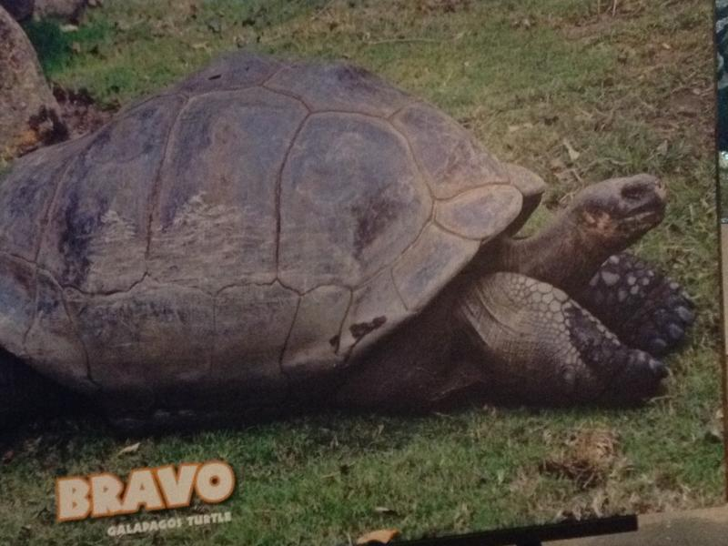 Bravo, an 84 pound Galapagos tortoise, will be the star of the exhibit.