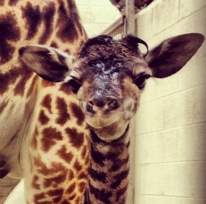 """What a cutie! Keeper is pretty sure it's a girl, but we'll let you know when that's official."""