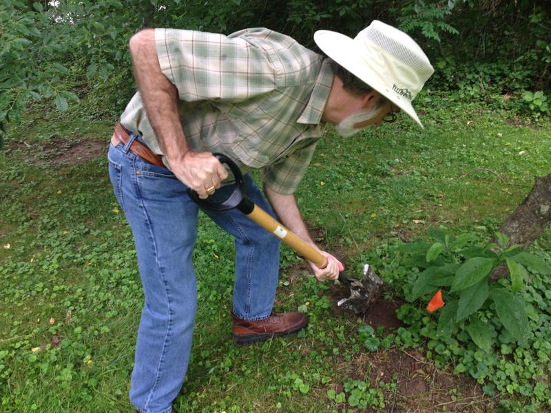 Entomologist Gene Kritsky, of the College of Mt. St. Joseph, buried sensors to check the soil temperature. Cicadas emerge when it is 64 degrees.