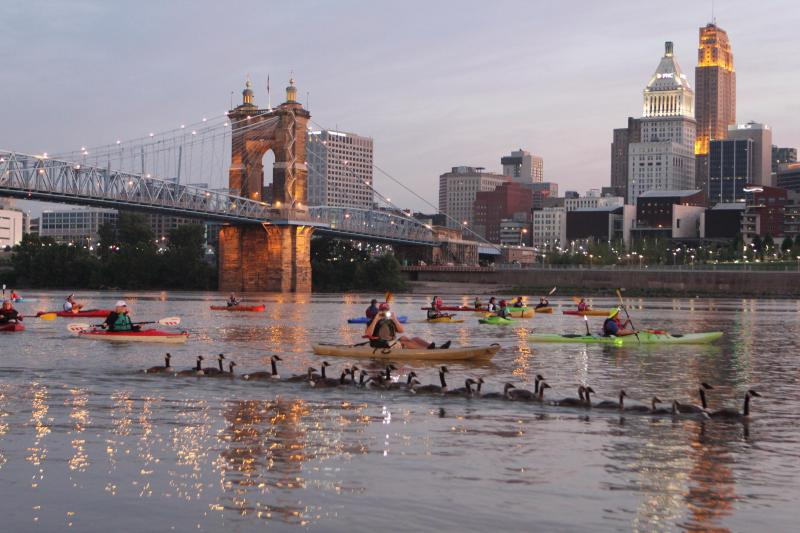 Geese join kayakers on their sunrise float for Paddlefest 2013.