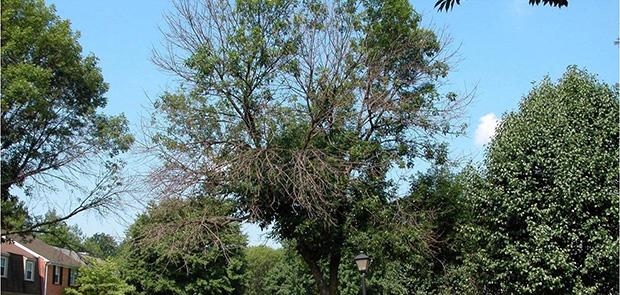 Trees are being damaged by disease and insects.
