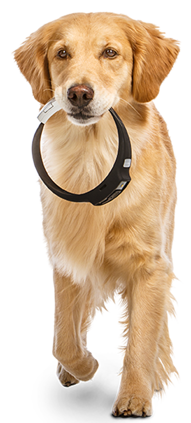 Voyce monitors the health of your pet.