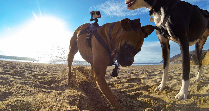 See what your pet sees through the GoPro camera.