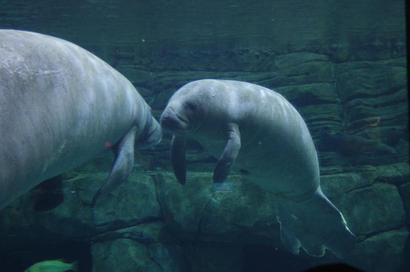 BamBam and 2,250 pound Betsy are getting along well, according to their keepers.