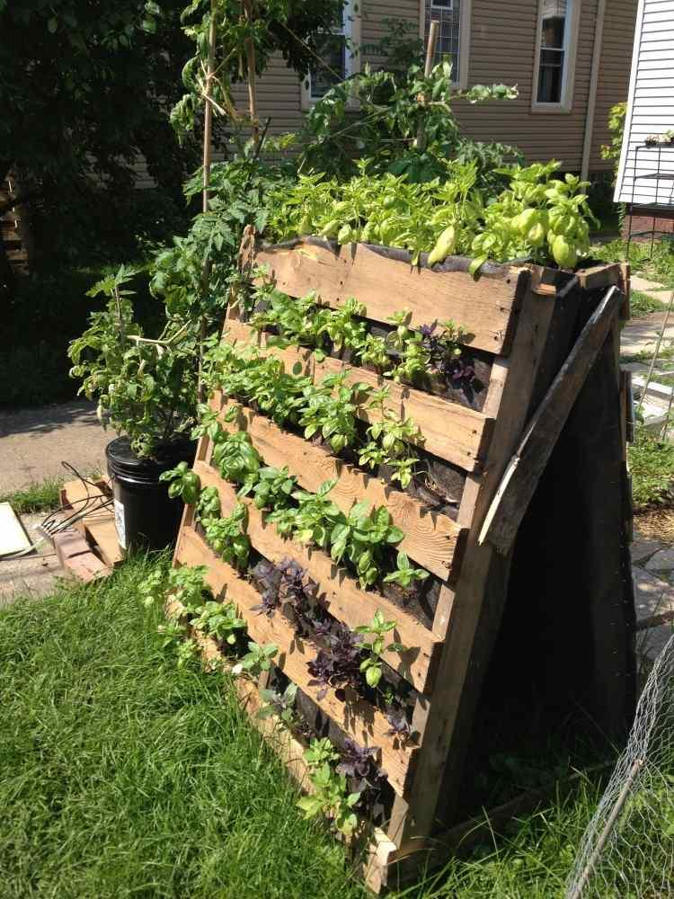 small market gardening as a career wvxu. Black Bedroom Furniture Sets. Home Design Ideas