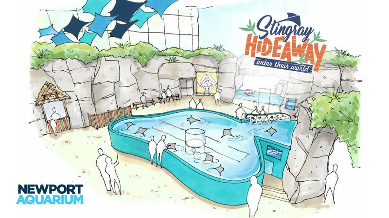 Artist rendering of Stingray Hideaway set to open in May at Newport Aquarium.