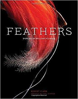 Author and photographer Robert Clark examines the beauty, diversity and functionality of bird feathers.