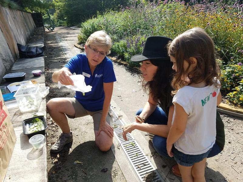Naturalist Kathy Charvat gives Amy Webb and daughter, Hazel, an impromptu lesson in monarchs at the Highfield Discovery Garden in Glenwood Gardens