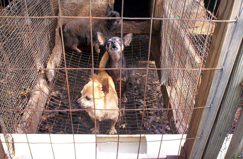Stop Puppy Mills Ohio is calling for a ban on housing dogs in stacked cages and also calls for adequate food, clean water and veterinarian care.