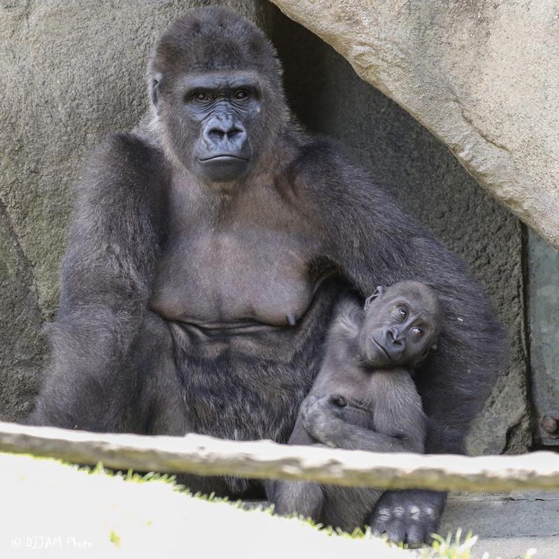 Anju and her daughter Elle at the Cincinnati Zoo