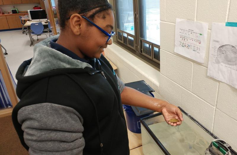 Anaiah Brooks holds a mussel her class is tending before releasing it into the wild, to help local mollusk populations.
