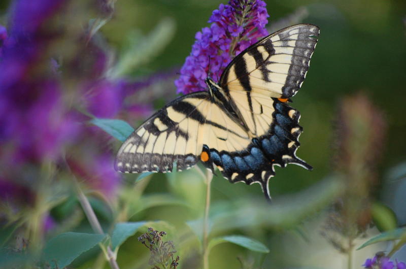 Learn how to make your yard attractive to pollinators at the March 22 Cincinnati Zoo Sustainable Landscape Symposium.