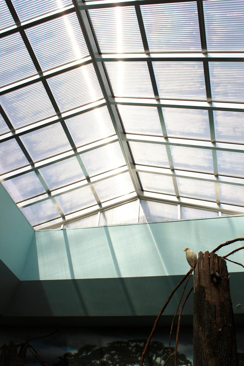 New skylights, like these in the South American aviary, improve the UV lighting for the birds.