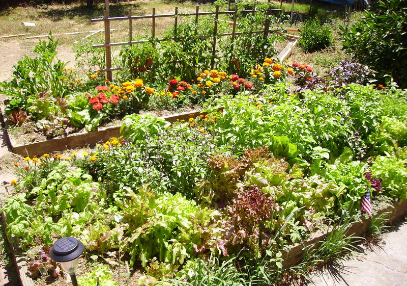 You can grow an abundance of produce in a relatively small area of your yard.