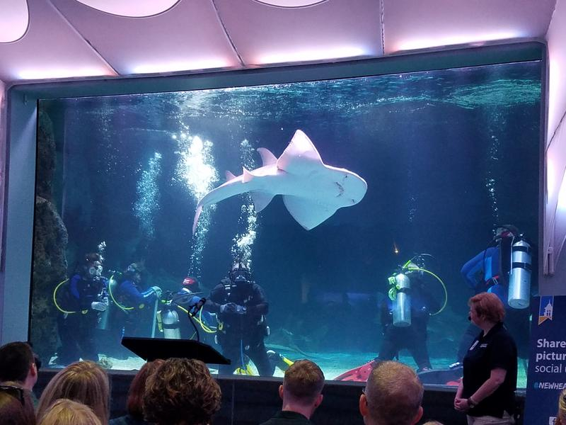 Despite the shark ray above his head, diver Bruce Lanman says Denver the turtle is the scariest animal in the shark tank because he's curious and his bite packs a lot of pressure.