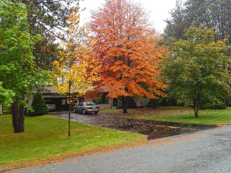 The right tree selection can add color, texture and value to your landscape.