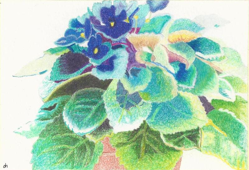 African violets in colored pencil by Donna Hoffman.