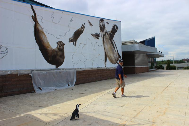Paula waddles behind her keeper in front of the ArtWorks mural. Run, Paula, Run!