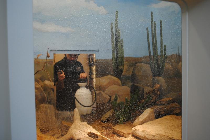 A worker washes the windows in a snake enclosure while the occupant is elsewhere.