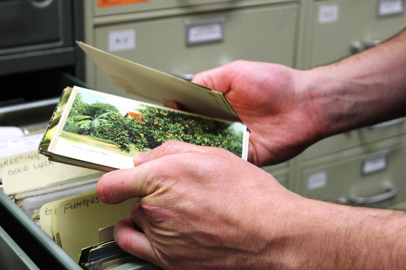 The Bowden Postcard Collection at Miami University tops half a million postcards.
