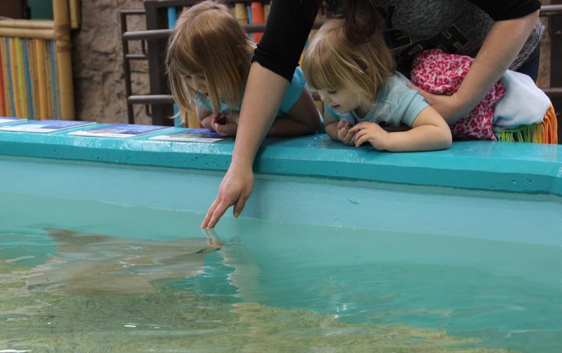 Madelyn and Gwendolyn Heather watch as mom, Jessica, reaches down to touch a stingray in the aquarium's new exhibit.