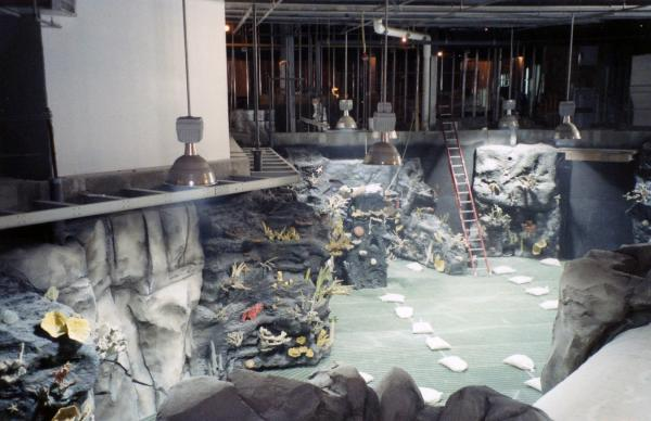 The shark tank while it was still under construction.