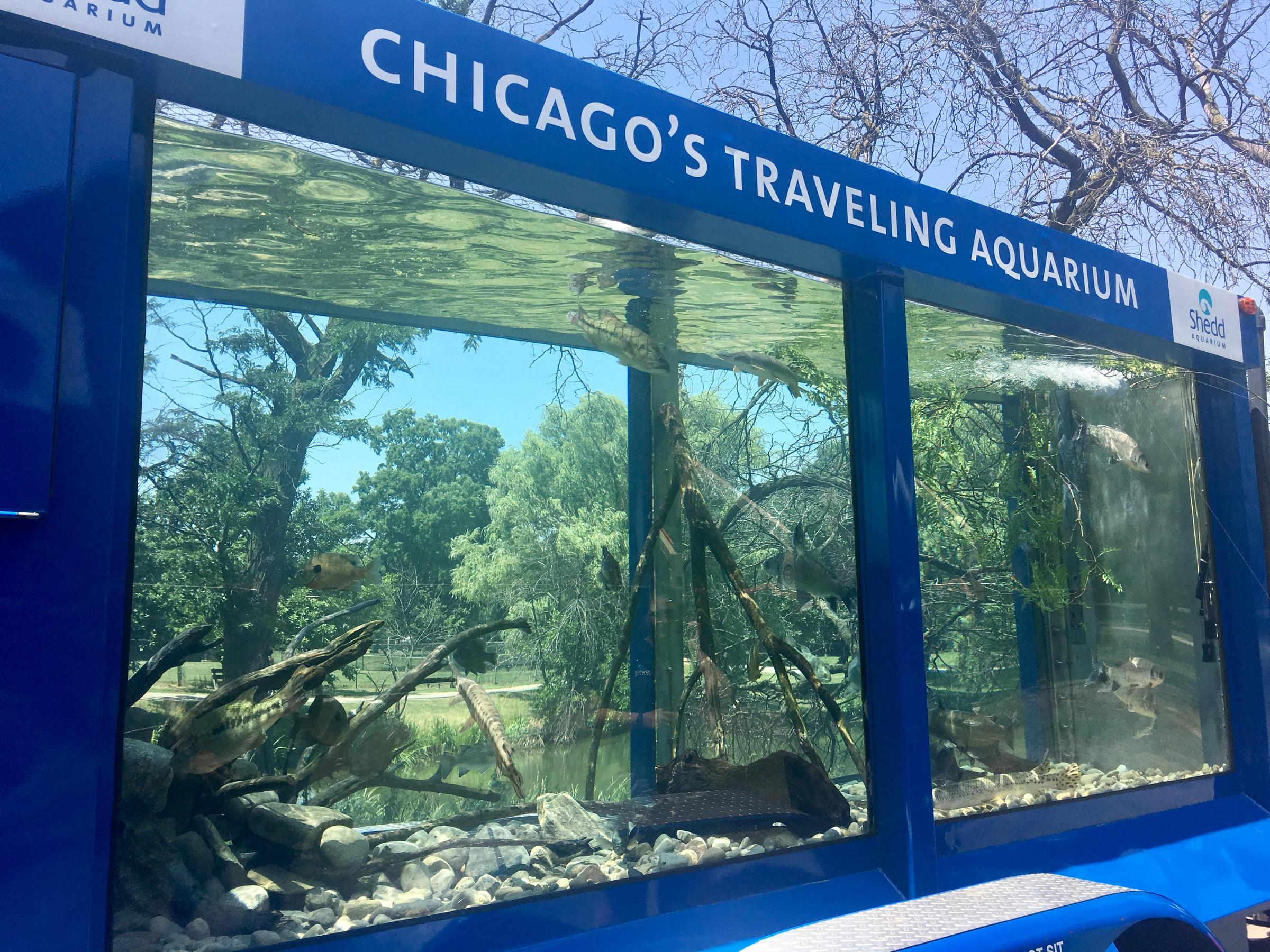 why is a local aquarium making the rounds in chicago wvxu