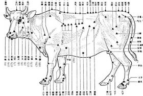 Dr. Cynthia Benbow performs acupuncture on a variety of animals, including exotic and domestic animals.