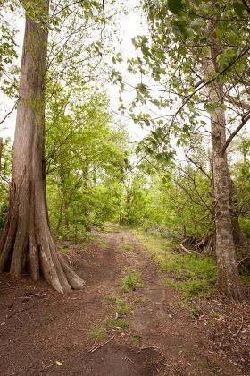 There are more than 10 miles of established trail at Woodlands Conservancy.