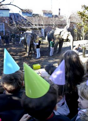 There were plenty of party hats, presents and birthday cake for both elephants and guests.