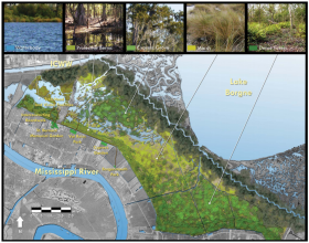 Proposed Bayou Bienvenue and Ducross Marsh re-vegetation project.