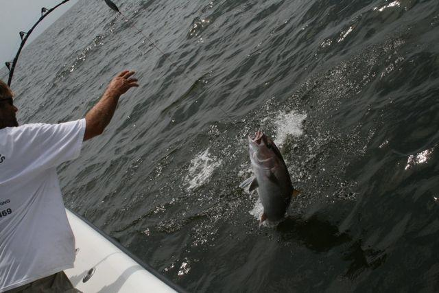 Fishing for amberjack, a popular restaurant fish, off Louisiana's Gulf coast.