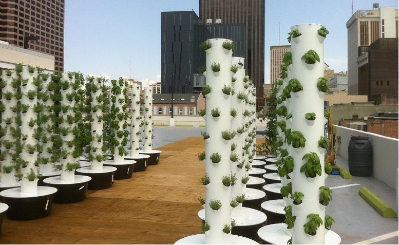 A group of aquaponic towers created by A.M.P.S. allow Rouse's to grow fresh produce on location.