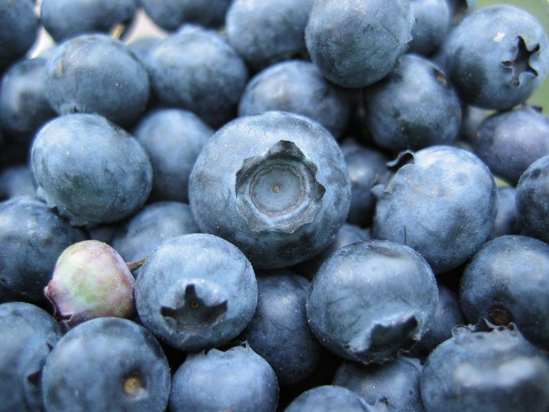 Hopefully there will be this many blueberries at this year's fest...