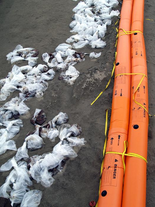 A Grand Isle beach soiled with oil after the BP spill.
