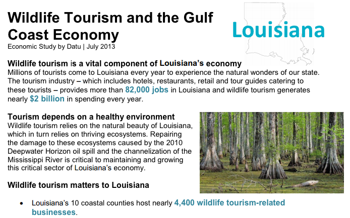 A screenshot of the beginning of the wildlife tourism report.