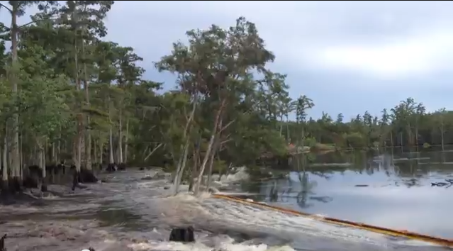 A screenshot of the video capturing more trees being swallowed by the Assumption Parish sinkhole.