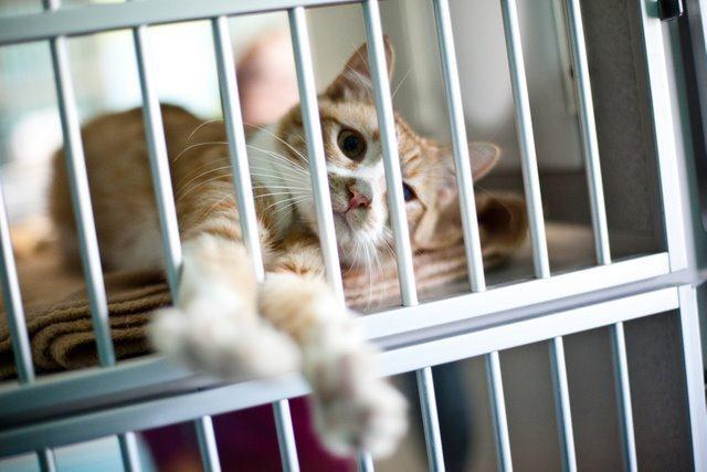Animal shelter pets are vaccinated, spayed, neutered, microchipped and ready to be adopted!