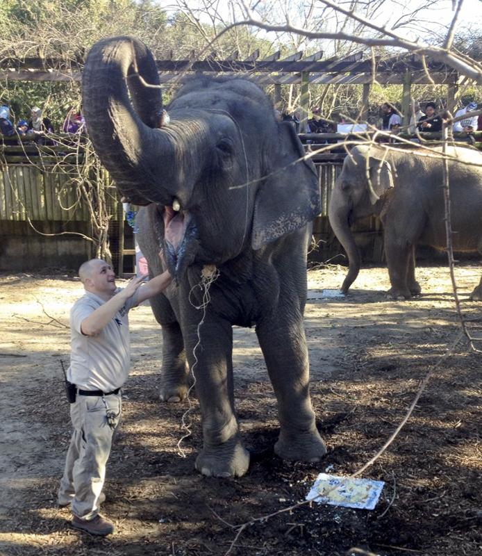 Joe Forys, Audubon Zoo's Curator of Large Mammals, joined Panya the elephant as she celebrated her 50th birthday last week.