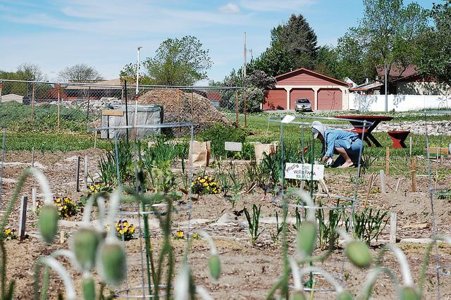 The new NORA Growing Green program allows residents to lease or purchase vacant lots and turn them into farms, community gardens, or other green space.
