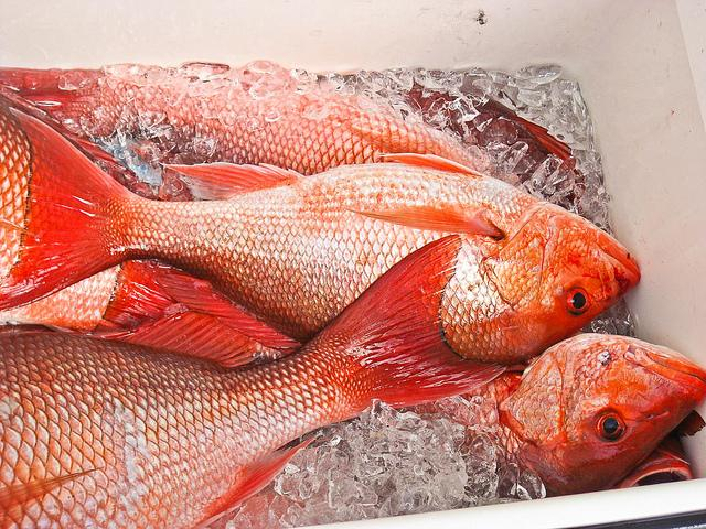 The government has reduced this year's recreational snapper season in the Gulf of Mexico to just nine days.