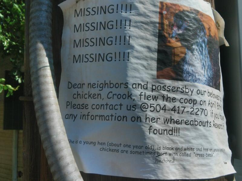Putting up flyers is one of several things you can do if your pet goes missing.