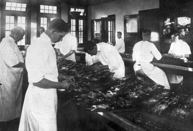 Lab technicians examine dead rats in New Orleans, circa 1914.