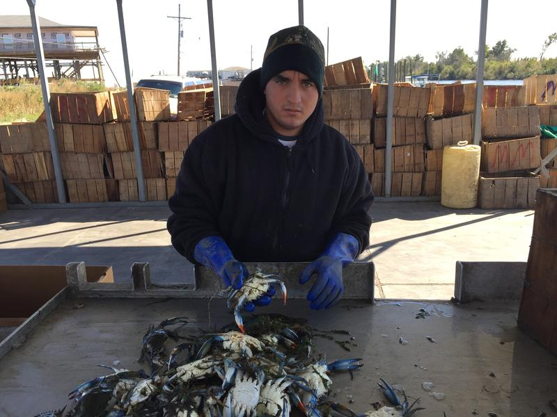 A fisherman sorts the day's catch on Tony Goutierrez's dock on Hopedale Highway in Hopedale, Louisiana.