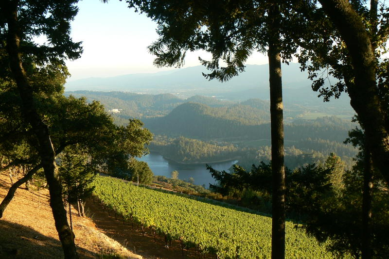 Cakebread Cellar's Dancing Bear Ranch rests in the hills of Napa Valley. It's high elevation makes it suitable for growing Cabernet Sauvignon, Merlot, and Cabernet Franc.