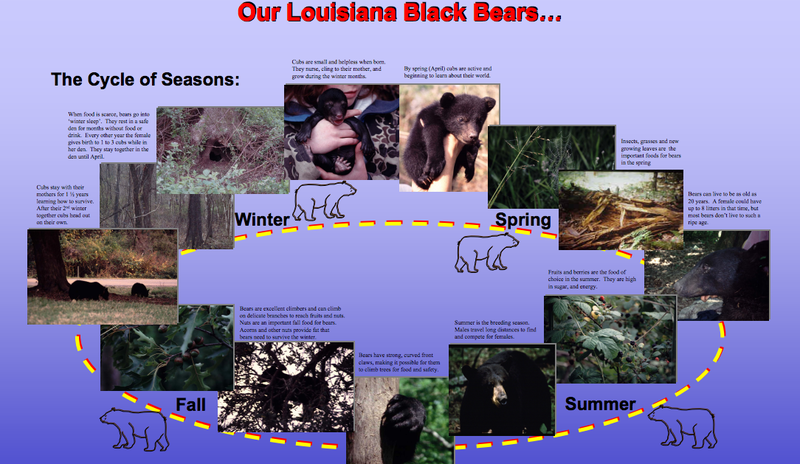 Black Bears are the official state mammal of Louisiana.