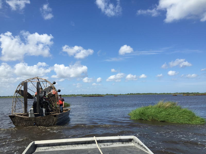 A view from the airboat in Joe Madere marsh unit.